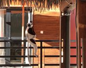 L'Hôtel Lovencie Lodge - Majunga